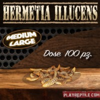 HERMETIA ILLUCENS DOSE DA 100 PEZZI MEDIUM-LARGE